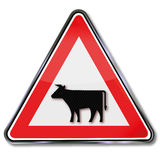Warning cows Royalty Free Stock Photo