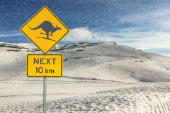 Warning Kangaroo Skiing Stock Image