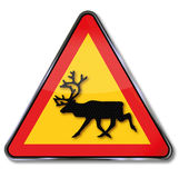 Warning reindeer. On the street in Sweden Stock Images