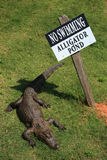 Warning sign. Alligator sunning itself next to a warning sign Stock Photos
