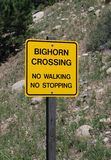 Warning sign: Big Horn Sheep Crossing Royalty Free Stock Images