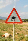 Warning sign for camels on Socotra island Royalty Free Stock Image