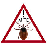 Warning sign. Carefully harvest bug. illustration Stock Photography