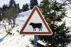 Warning sign with a designed black cow. Closeup of a triangle shaped warning sign with a designed black cow on its center Royalty Free Stock Image