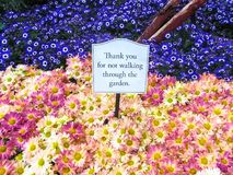Warning sign - `Thank you for not walking through the garden`. Las Vegas. USA. stock image
