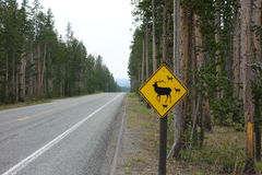 A warning sign for tourists at yellowstone park Stock Image
