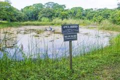 Warnzeichen des Krokodils Stockfotos