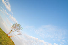 Warped picture of lonely tree. With blue sky Stock Photo