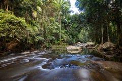Warringa pöl Gold Coast arkivfoton