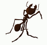 Warrior ant Stock Images