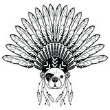 Warrior style French bulldog with tribal Headdress with plain feathers in white and black symbolizing native American people Stock Photo