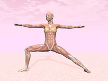 Warrior yoga pose for woman with muscle visible Stock Photos