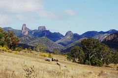 Warrumbungle National Park Autsralia. Warrumbungle National Park, Australia is a popular place for tourists to visit.  Kangaroos and koalas are seen in in this Royalty Free Stock Photography