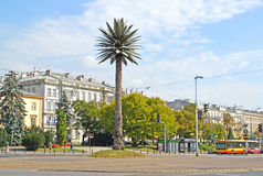WARSAW, POLAND. A view of a palm tree on Charlles de Gaulle`s outcome near Sredmestye. WARSAW, POLAND - AUGUST 23, 2014: A view of a palm tree on Charles de Stock Images