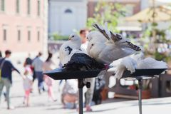 Warsaw. Royal castle. Pigeons stock photos