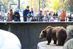 Warsaw Zoo. WARSAW, POLAND - OCTOBER 3: Every day many people come to watch the animals in the Warsaw Zoo, October 3, 2010 in Warsaw, Poland Stock Images