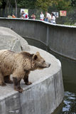 Warsaw zoo with bear and tourists Stock Image