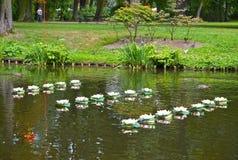 Warshau, Polen Ornament van kunstmatige lilie op een waterspiegel in het Lazenki-park Royalty-vrije Stock Afbeeldingen