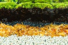 Warstwy terrarium Zdjęcia Royalty Free