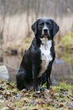 Wartehund Stockbilder