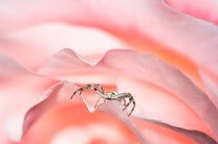 Warteopfer auf rosafarbenen Blumenblättern Stockfotografie