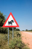Warthog crossing Stock Images