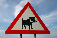 Warthog crossing Royalty Free Stock Photo