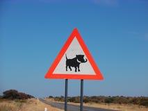 Warthog crossing Stock Photo