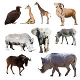 Warthog and few other African animals. Isolated over white stock photography