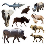 Warthog and other African animals. Isolated over white background Royalty Free Stock Images