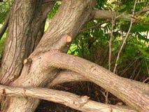 Wartung eines Baums. lizenzfreie stockfotos