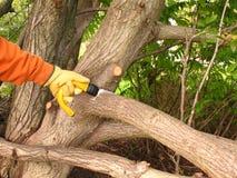 Wartung eines Baums. stockbild