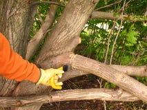 Wartung eines Baums. stockbilder