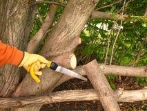 Wartung eines Baums. lizenzfreies stockfoto