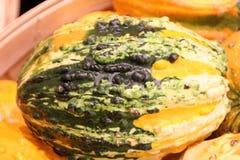 Warty διακοσμητικό πορτοκάλι κολοκυθών και πράσινος, pepo Cucurbita Στοκ Φωτογραφία