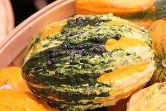 Warty διακοσμητικό πορτοκάλι κολοκυθών και πράσινος, pepo Cucurbita Στοκ Εικόνες
