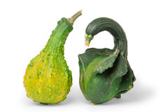 Warty gourds Stock Image
