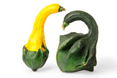 Warty gourds Royalty Free Stock Photos