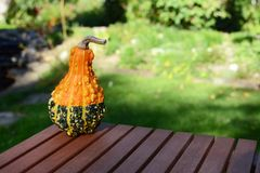 Warty orange and green ornamental gourd on wooden table Royalty Free Stock Images