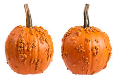 Warty Pumpkin Stock Photo