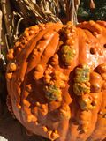 Warty Pumpkin Royalty Free Stock Photography