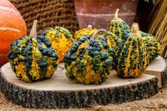 Warty pumpkins Royalty Free Stock Photo