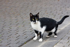 Wary alley cat Royalty Free Stock Image