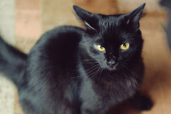 Wary Black Cat Royalty Free Stock Images