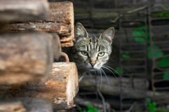 Wary cat. Cat look from behind the firewood Stock Images