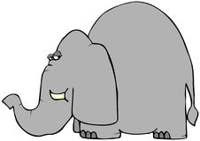 Wary Elephant. This illustration depicts an elephant looking back with a wary expression vector illustration
