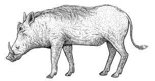 Warzenschweinillustration, Zeichnung, Stich, Tinte, Linie Kunst, Vektor lizenzfreies stockfoto
