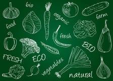 Warzyw doodles - zarząd szkoły Obraz Royalty Free