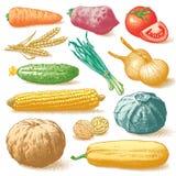 Warzyw, owoc I rośliien Colour wektor, Ilustracji