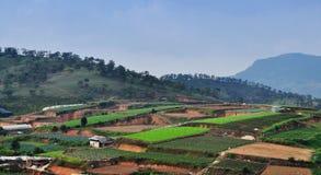 Warzyw pola w średniogórzu, Dalat Obrazy Royalty Free